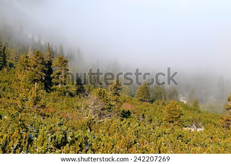 Clouds advancing above green forest on the mountain side