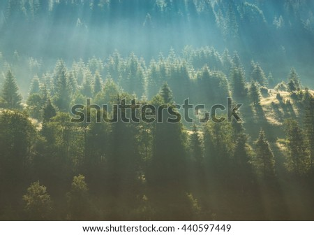 Clouds and fog over pine tree forest - stock photo