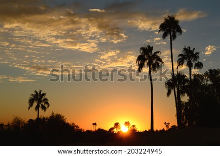 Clouds and palm on horizon at sunset - stock photo