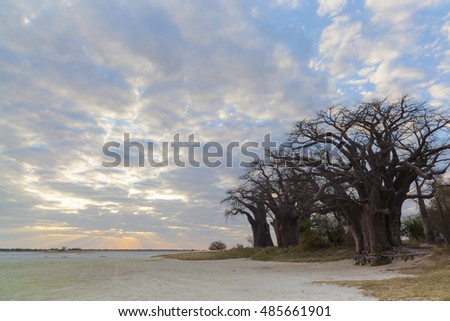Clouds and sunset at Baines baobabs