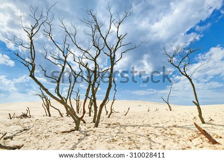 Clouds desert blue sky sands oasis trees Poland Slowinski National Park nature reserve - stock photo