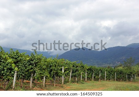Clouds hang over the mountains and vineyard in Tuscany, Italy - stock photo