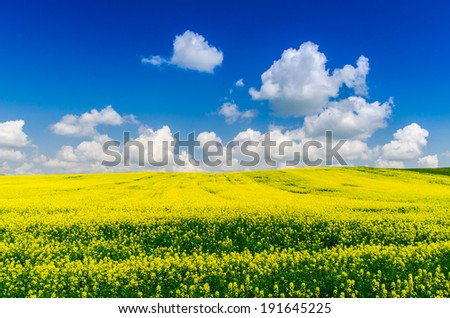 Clouds over a yellow field - stock photo