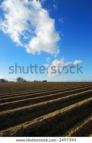 Clouds over an asparagus field on a hill - stock photo