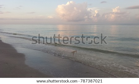 Clouds over the beach with a white ibis walking the shoreline