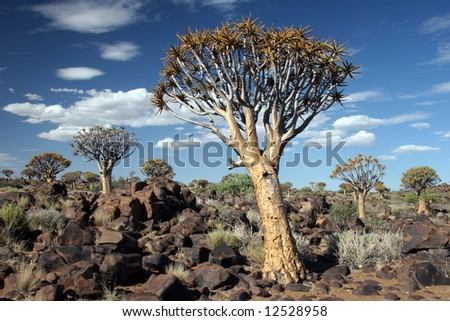 Cloudscape over Desert landscape with granite rocks and a quiver tree (Aloe dichotoma). South Namibia. Namibia