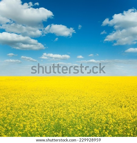 Cloudy blue sky over yellow spring field - stock photo
