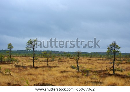 cloudy cold day in swamp - stock photo