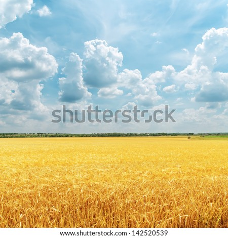 cloudy sky over golden field. rain before - stock photo