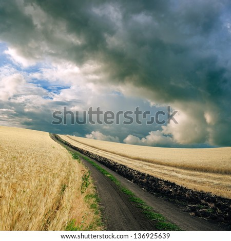 Cloudy sky over the wheat field - stock photo