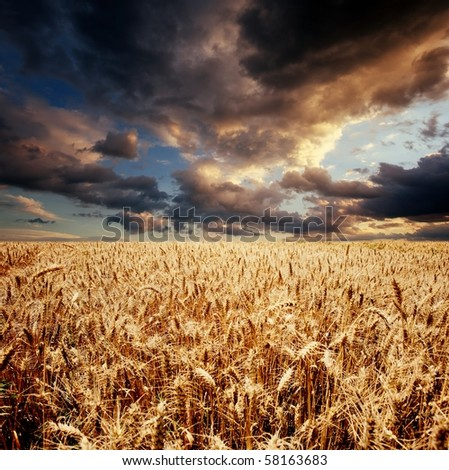 cloudy sky over wheat field
