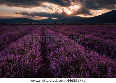 Cloudy sunset at lavender field, near Kazanlak town, Bulgaria - stock photo