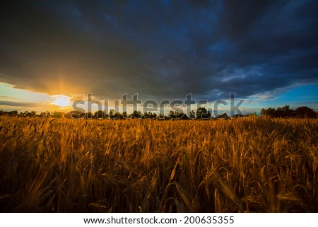 Cloudy sunset on a wheat field. - stock photo