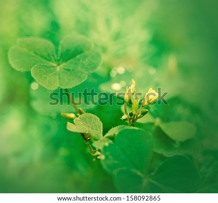Clover and little yellow flower - stock photo
