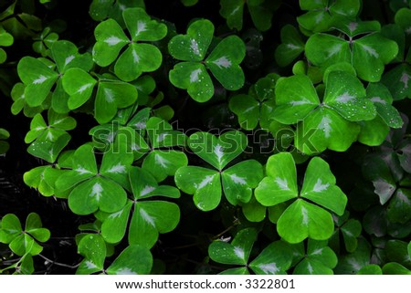 Clover at Limekiln State Park - stock photo