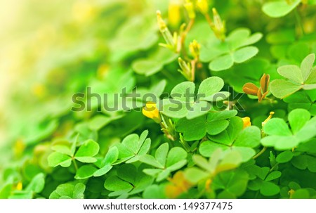 Clover (clover and little flower) - stock photo