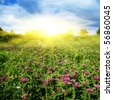 Clover field and sun. - stock photo