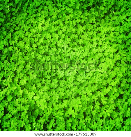 Clover green background - stock photo