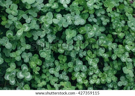 clover in a spring forest - stock photo