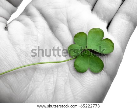clover in the hand , can be used as concept for luck related themes, selective desaturation - stock photo