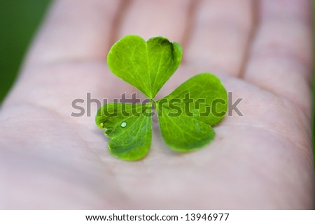 Clover leaf down on hand. Leaf with water drop.