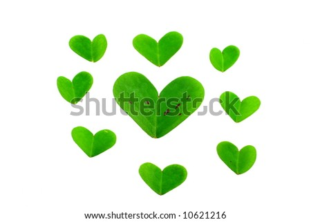 clover leaf parts on a white background - stock photo
