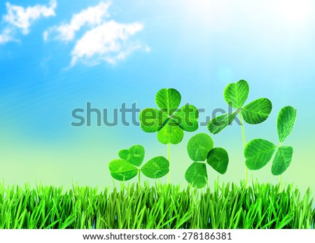 Clover leaves in grass against blue sky background - stock photo