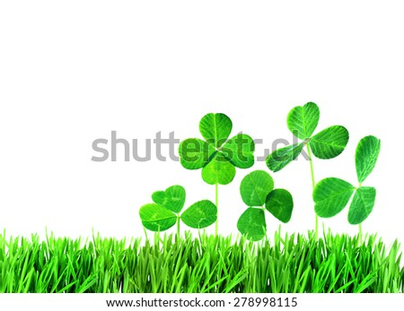 Clover leaves in grass isolated on white - stock photo