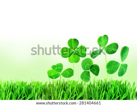 Clover leaves in grass on light background - stock photo