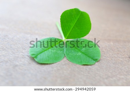 Clover leaves on wooden background - stock photo