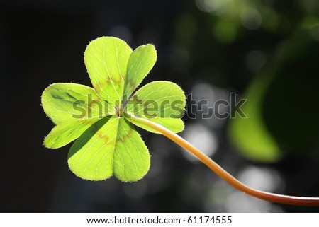 clover on blurred background