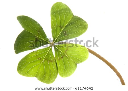 clover on blurred background - stock photo