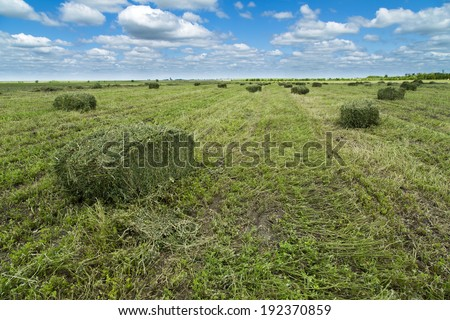 Clover, shamrock hay bales at field - stock photo