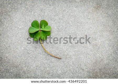Clovers leaves on Stone Background.The symbolic of Four Leaf Clover the first is for faith, the second is for hope, the third is for love, and the fourth is for luck. Shamrocks is symbolic dreams .