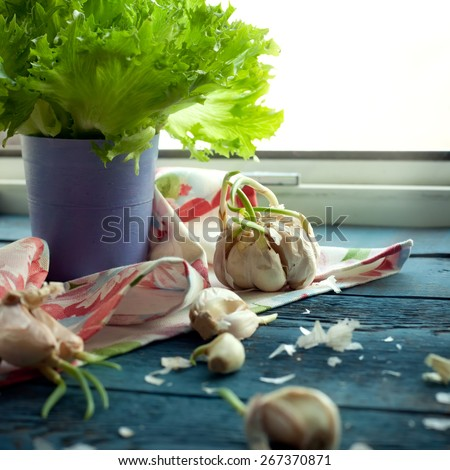 Cloves of garlic on kitchen window sill, natural light photo, toned - stock photo