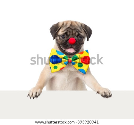 Clown dog peeking from behind empty board. isolated on white background - stock photo