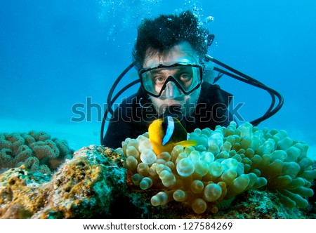 Clown fish and diver - stock photo