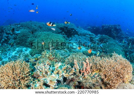 Clownfish and other tropical fish swim around a healthy, colorful, tropical coral reef - stock photo