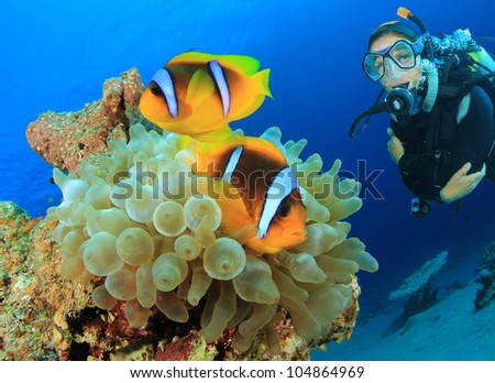 Clownfish and Scuba Diver - stock photo