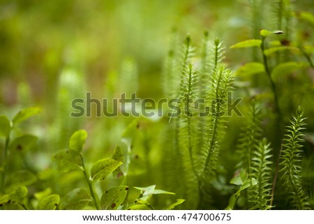 clubmosses natural macro floral background