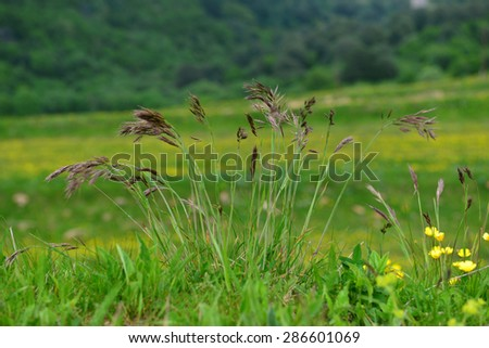 Clump of grass plant on bokeh nature background - stock photo