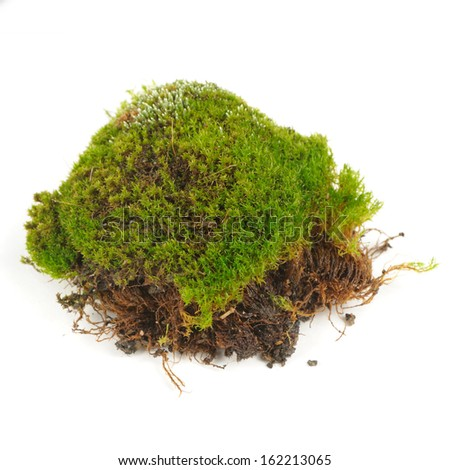 Clump of Green Moss Isolated on White Background - stock photo