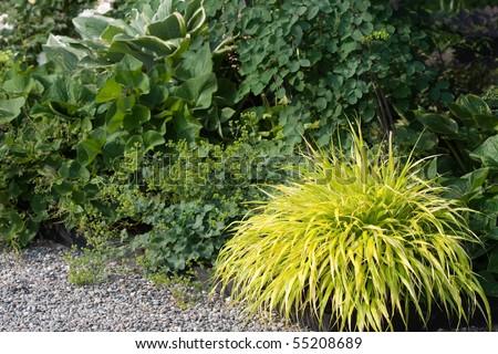 Perennial border stock photos perennial border stock for Ornamental grass border