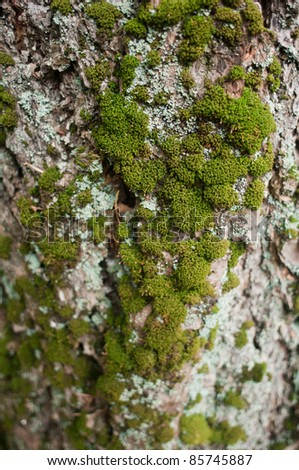 Clumps of Green Moss Growing on a Tree - stock photo