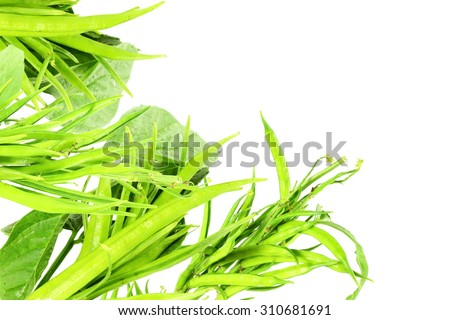 cluster bean or guar been indian vegetable in white background