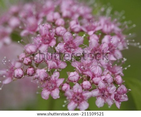 cluster of pink flowers with blurred background - stock photo