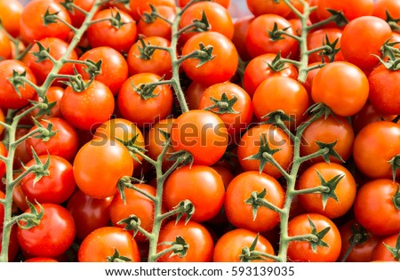 cluster of red  cherry tomatoes for the background
