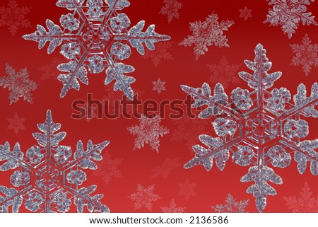 cluster of snowflakes on a red background - stock photo