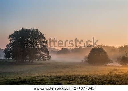 Clusters of trees on a meadow in light of the rising sun