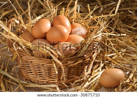 Clutch of freshly laid eggs in barn setting with straw - stock photo